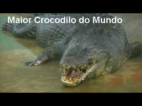 Maior Crocodilo do Mundo Crocodile Biggest in Te World