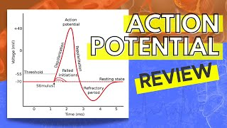 013 A Review of the Action Potential