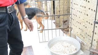 اقناع الكلاب بأكل الخبز عندما تضعه مع اللحوم لعمل وجبه مغذيه مع كابتن ابونور 01003035709