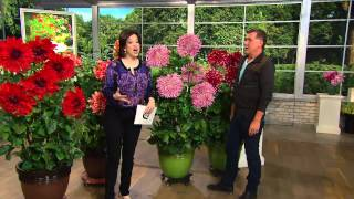 Roberta's 4-pc. Over-the-Top Dahlia Extravaganza Collection with Dave James