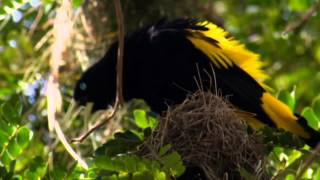 NAT GEO WILD HD (LIVING MUSIC ACTION) 2012