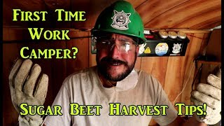 Tips for Sugar Beet Harvest Work Camping Job! VanLife On the Road