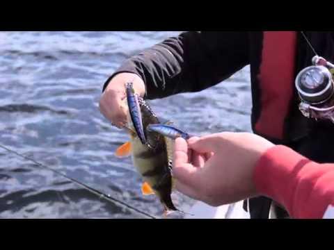 апрельская рыбалка на окуня видео
