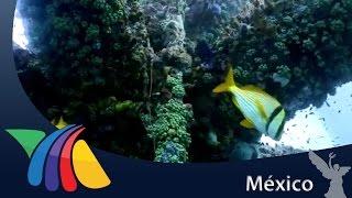 Javier Alatorre muestra la vida marina en plataforma petrolera | Noticias
