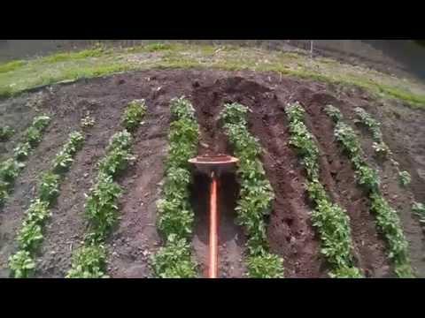 Выращивание картофеля с умом без прополки и окучивания 64
