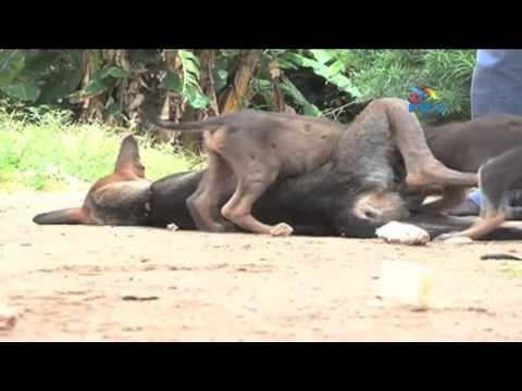 Xxx Mp4 Mbwa Amlea Tumbiri Kwale 3gp Sex