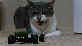Cats and dogs react to RC toys - Funny animal compilation