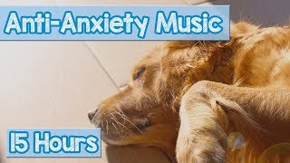 Calming Music for Puppies with Anxiety! Soothing Lullabies for Anxious and Stressed Dogs! (Tested)