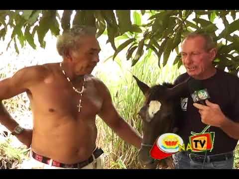 HOMENS DE 30 ANOS TEM RELAÇÕES COM EGUA DE 6 MESES NO BODE NA TV 05 03 2013