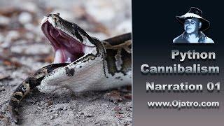 Python Cannibalism 01 - Narration