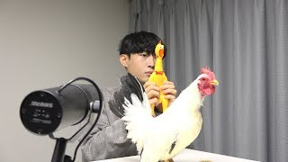 Toto - Africa ( Chicken cover )