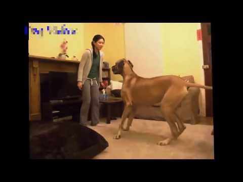 Xxx Mp4 Funny Videos Animal Funny Dogs Funny Cat 2016 Dog And Girls Funny Videos 3gp Sex