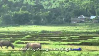 Shan - Tai song , Sai Moo's song: ฤดูทำนา