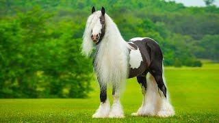 أجمل 10 فصائل خيول نادرة في العالم