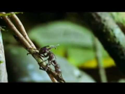 Stange Fungus Explodes The Heads Of Insects