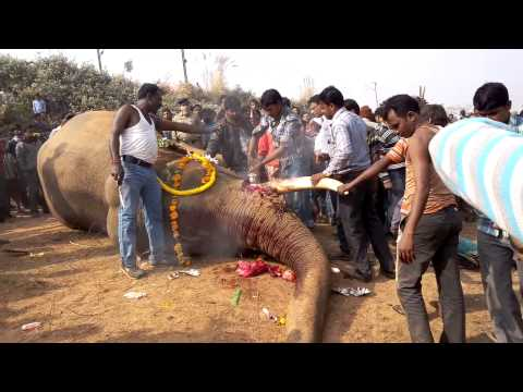 No. 3 Accident Elephant in Bishnupur