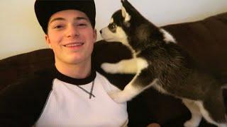 CUTE A$$ DOG! (Siberian Husky)