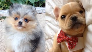 All The Puppies   Cute Dog Video Compilation 2017