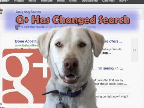 How Google Plus Has Changed Search Forever!