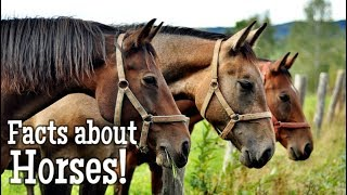 Horse Facts for Kids   Classroom Edition Animal Learning Video