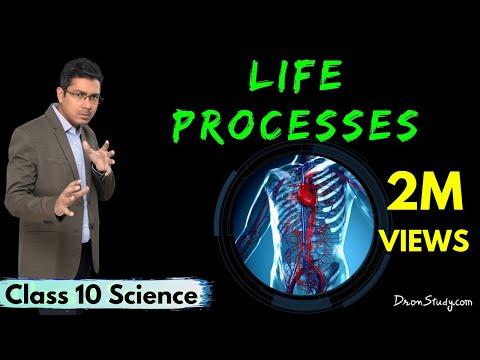 Xxx Mp4 Life Processes 1 CBSE Class 10 X Science Biology 3gp Sex