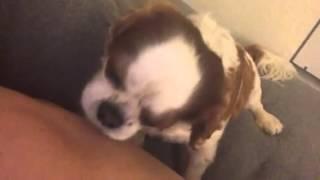Dog licks back