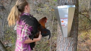 Our First Time Butchering Chickens: What Was it Like?