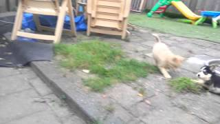 Puppy playtime in de tuin