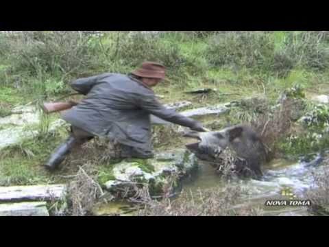 Monterias Videos de caza mayor Todo Jabalí parte 3