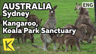 【K】Australia Travel-Sydney[호주 여행-시드니]코알라 파크/Sydney/Koala Park Sanctuary/Kangaroo