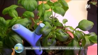 Plantes Connectés (e=m6)