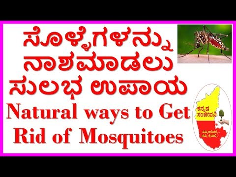 How to Kill Mosquitoes Naturally 100% Working..Kannada Sanjeevani..