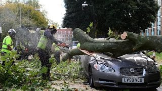 Tree Cutting Fails And Idiots With Chainsaws 1
