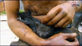 Man Risks His Life To Save Kittens Caught In A Deadly Oil Pipeline Explosion