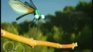 Miniscule Insect High Velocity
