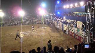 Piaçu rodeio show Itapemirim ES