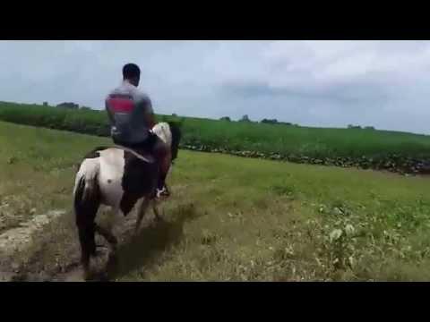 Xxx Mp4 TE Horseback Riding Amp 4 Wheeling 3gp Sex