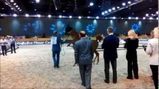 At the 12th Dubai International Arabian Horse Championship