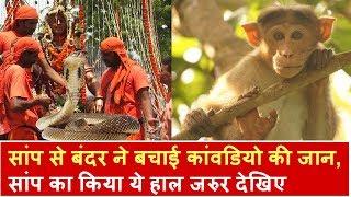 सांप से बंदर ने बचाई कांवडियो की जान, सांप का किया ये हाल जरुर देखिए | Headlines India