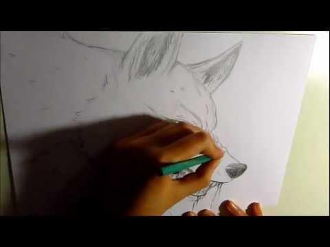 rysowanie wilka 3