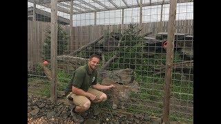 Animal Adventures with Jordan: Cougar