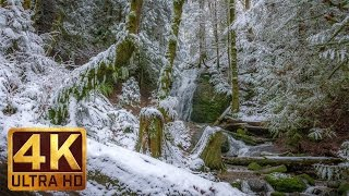 Winter Forest Walk in 4K | 2 HRS Relaxation Video with Beautiful Music - WATER & FOREST - Part 5