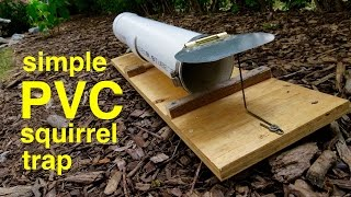 How to make ● a HUMANE PVC SQUIRREL TRAP (that works!)