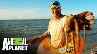 Animales que te puedes encontrar bajo el agua | Wild Frank en México | Animal Planet