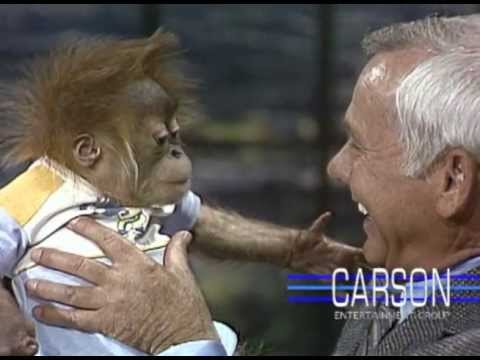 Baby Gorilla from San Diego Zoo Orangutans on Johnny Carson s Tonight Show