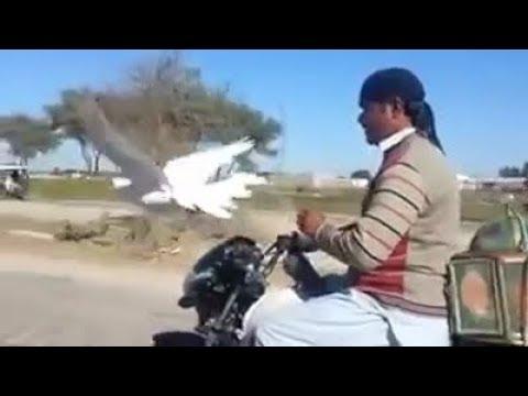 Xxx Mp4 Allah Ki Qudrat Man And Birds 3gp Sex