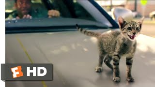 Keanu (2017) - Kitty Car Chase Scene (9/10) | Movieclips