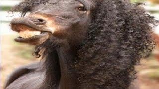 Horse shampoo will leave it sexy - Champu para caballos sexy experiencia ( Champu recording )
