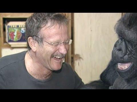Koko s Tribute to Robin Williams