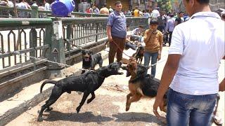 """""""سوق الجمعة"""".. تاجر: الكلاب مستويات وسعرها حسب جمالها"""